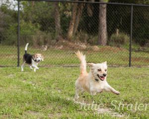 Doggie DC27