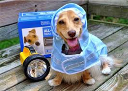 dog-in-raincoat