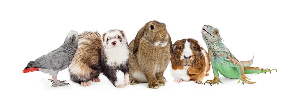 small pets shutterstock_394830724
